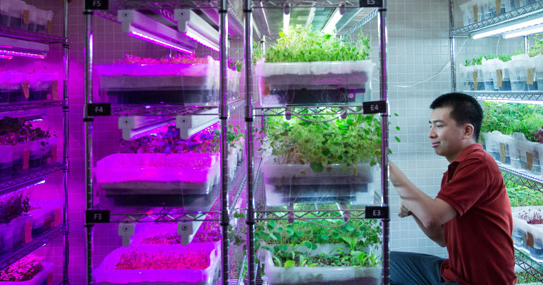 Daniel, 26, tends to hydroponic herbs at Edible Garden City's job site at E2C